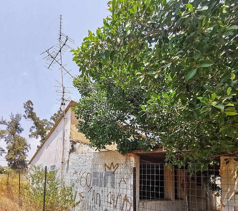 צילום - ישראל פרקר, מתוך אתר פיקיויקי