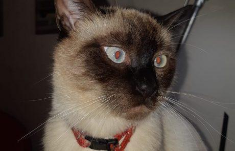 לאן נעלמים חתולי גיל עמל?