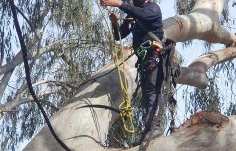 משמרים עצים ותיקים בעיר