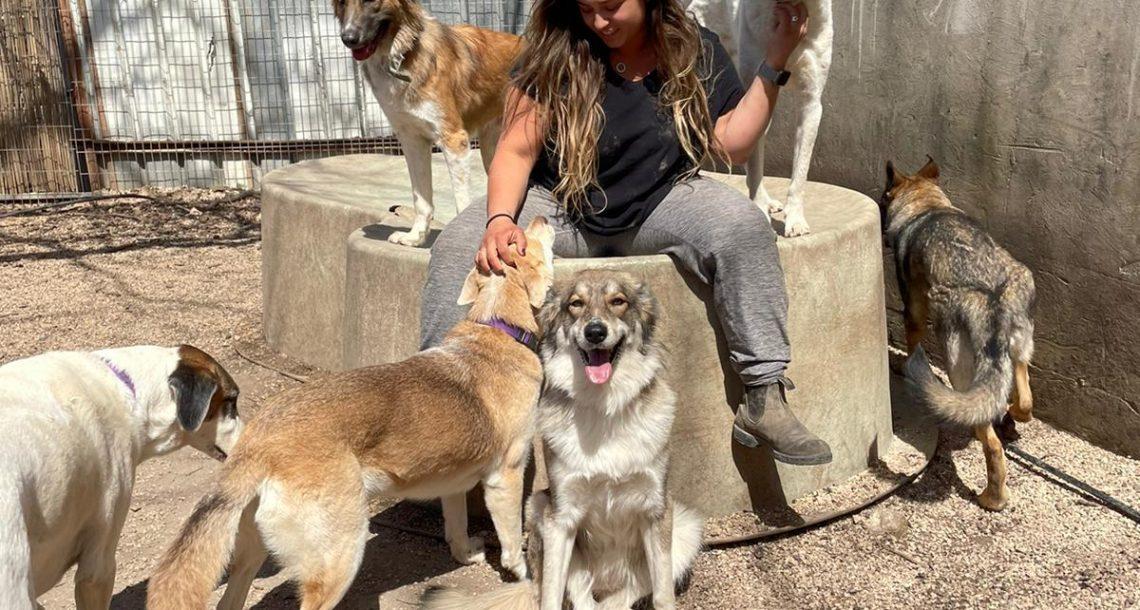 הכלבים מודים על ביטול הזיקוקים