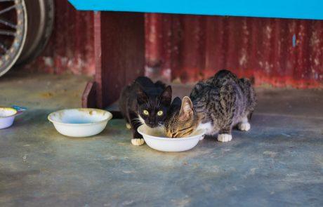 תוקף מאכילי חתולים